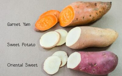 Can You Tell The Difference Between A Yam and A Sweet Potato?